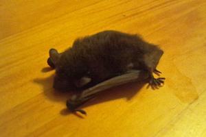 Bat_110810_w81