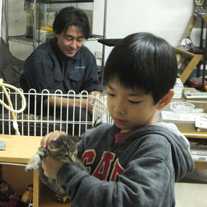121107_egarage_cats1