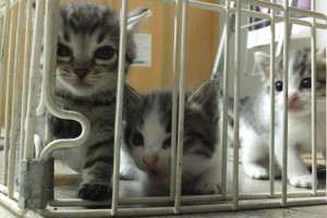 121107_egarage_cats2