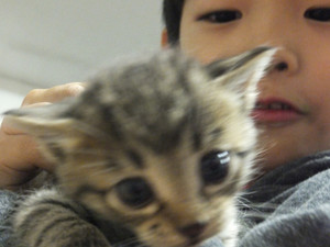 121107_egarage_cats3