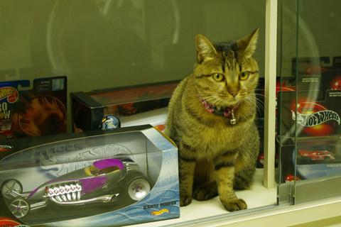 E_garage_cat_20141028